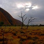 Trees at Ayers Rock with a bleak sky