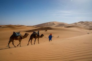 Experience Camel Riding in The Sahara Desert Morocco